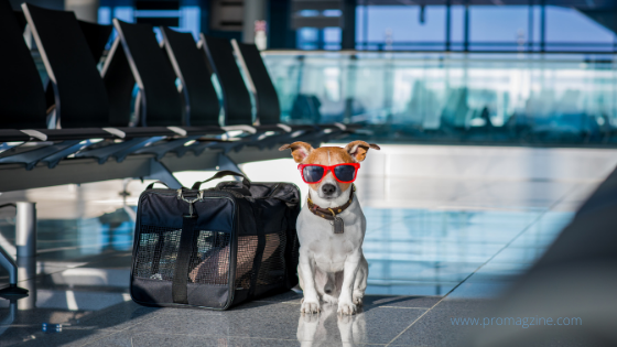 neRegulators give the nod for trained dogs, US Airlines to decide about the other pets on board.